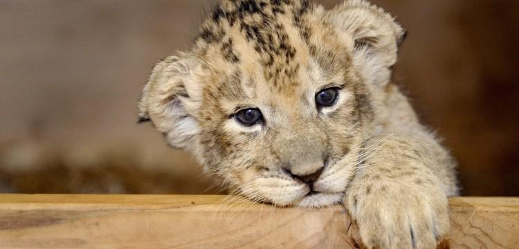 Лучшие контактные зоопарки Украины - настоящее общение с природой!